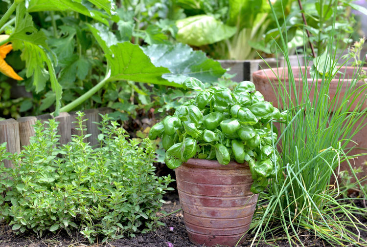 Potted plants growing in farm