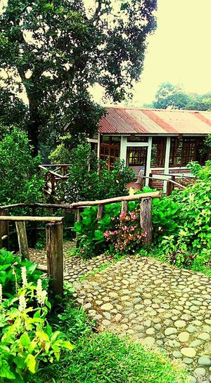 Comasagua LaLibertad Tourist Destination Touristic Place Tourism Turismo No People Landscape Tranquility Restaurant Flowers, Nature And Beauty Trees And Sky Nature Beauty In Nature Green Color Tranquil Scene Tree Mountain Range Mountain
