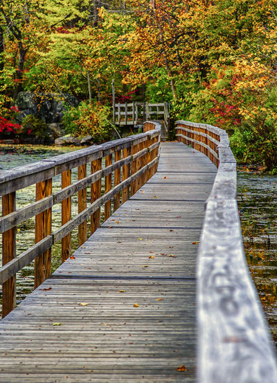 Wooden path in the autumn forest. Autumn Beauty In Nature Change Day Foliage Footbridge Leaf Nature No People Outdoors Railing Scenics The Way Forward Tranquil Scene Tranquility Tree Water Wood - Material