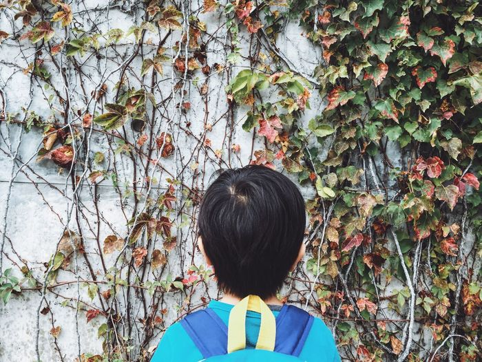 Rear view of boy looking at dry ivy plants on wall