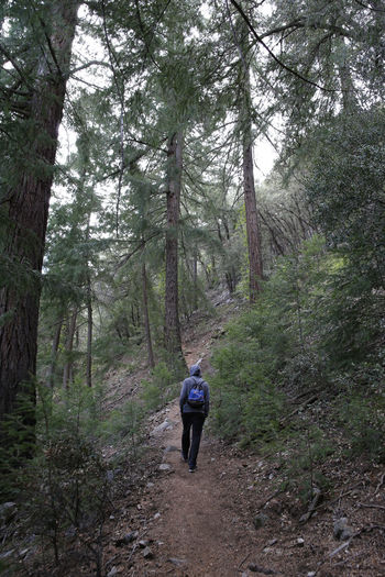 Adventure Backpack Beauty In Nature Branch Day Footpath Forest Full Length Hiking Leisure Activity Lifestyles Men Mountain Nature One Person Outdoors Real People Rear View Scenics Tranquil Scene Tranquility Tree Tree Area Tree Trunk Walking