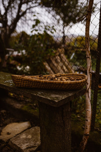 Close-up of rope on wooden post in forest