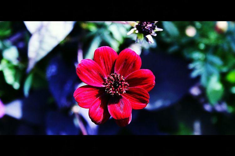 Favorit I Repris Choklate Flower EyeEmBestPics