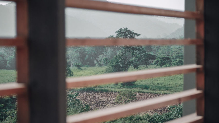 Close-up of plants seen through window