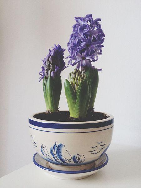 Purple flower Tranquility flower Purple green Nature pot Dirt soil Plant plants Alive  color Happy home Table desk Lively white
