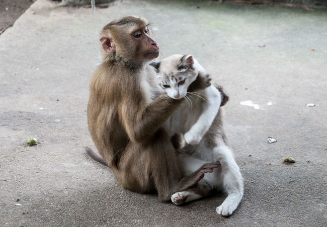 Animal Themes Animalfriendship Animallovers Animals In The Wild Best Friends Bestfriend Cat Cat Lovers Catlover Catlovers Cats Cats Of EyeEm EyeEm Best Shots Friendship Katze Katzen Mammal Monkey Monkey With Cat Monkeys Outdoors Pets Of Eyeem Thailand Travel Travellover The Street Photographer - 2018 EyeEm Awards My Best Travel Photo A New Beginning