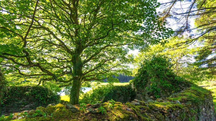 Tree Backgrounds Branch Full Frame Leaf Grass Green Color Plant Greenery Countryside Lakeside Sunrays Woods Lush Leaves