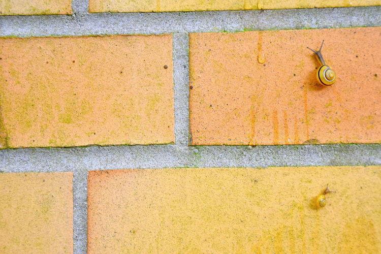 Paint The Town Yellow Schloss Bellevue Wall Schnecken Snails Snail Climbing Gelb Yellow Yellow Snailhouse