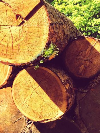 Trees Tree Wood - Material No People Timber Wood Log Day Nature Forest Firewood Sunlight Backgrounds Outdoors Brown Lumber Industry Plant Stack