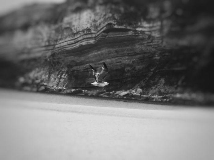 FlyLikeBirds PtOlix Blackandwhite Monochromatic Bird Seagull Beach - Finding New Frontiers