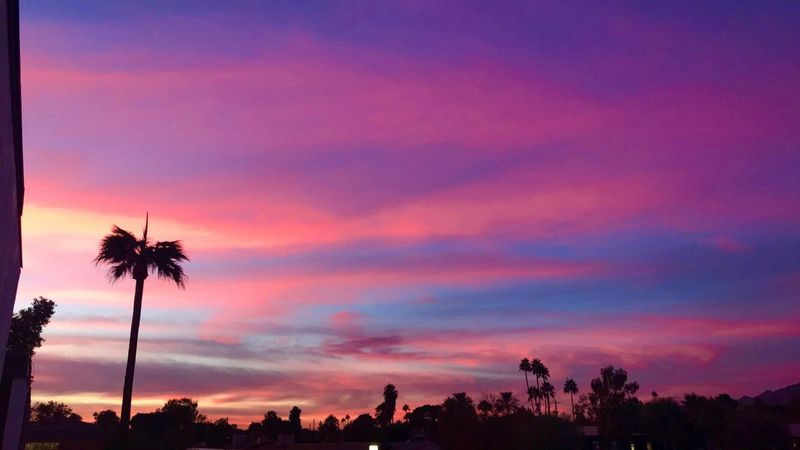 Mother Nature in all her glory. Silhouette Palm Tree Tree Beauty In Nature Sky Nature Scenics Cloud - Sky Tranquility Dusk Tranquil Scene Outdoors No People Day
