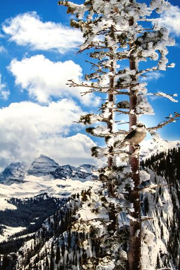Blue bird sky on the top of Snowmass mountain. Clouds cleared off just enough to snap this unreal picture of this bird playing at the top of the mountain. Hello World Snowmass Wildlife Wildlife Photography Wildlife & Nature Canon 70d Canon Colorado Maroonbells
