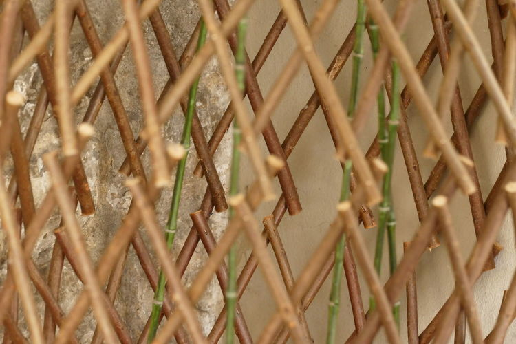 Green Green Color NoPeopleAround Pattern, Texture, Shape And Form Textured  Backgrounds Bamboo - Plant Beauty Beauty In Nature Brawn Cane Close-up Day Flower Root  Full Frame Indoors  Nature No People Outdoors Pattern Rose - Flower Rose Root