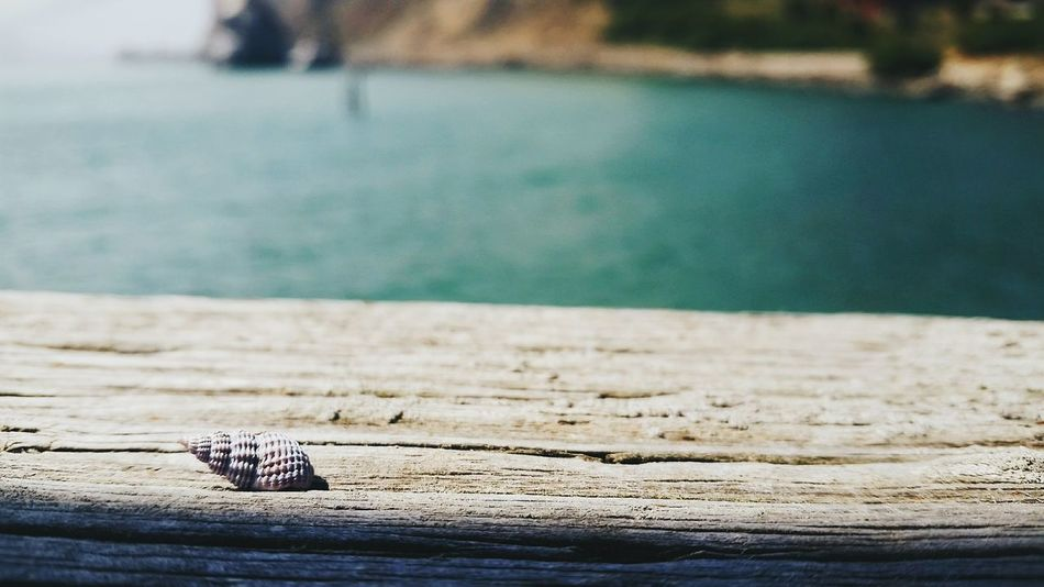 Water Seashell Bay Area San Francisco Beauty In Nature Personal Perspective Tourism Scenery Travel Destinations Shadow Sunlight