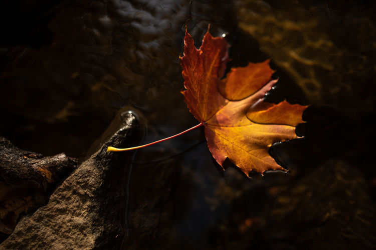 Plant Part Leaf Nature Autumn Close-up Change No People Fragility Vulnerability  Orange Color Plant Beauty In Nature Tree Focus On Foreground Outdoors Day Dry Yellow Rock Selective Focus Leaves Maple Leaf Natural Condition