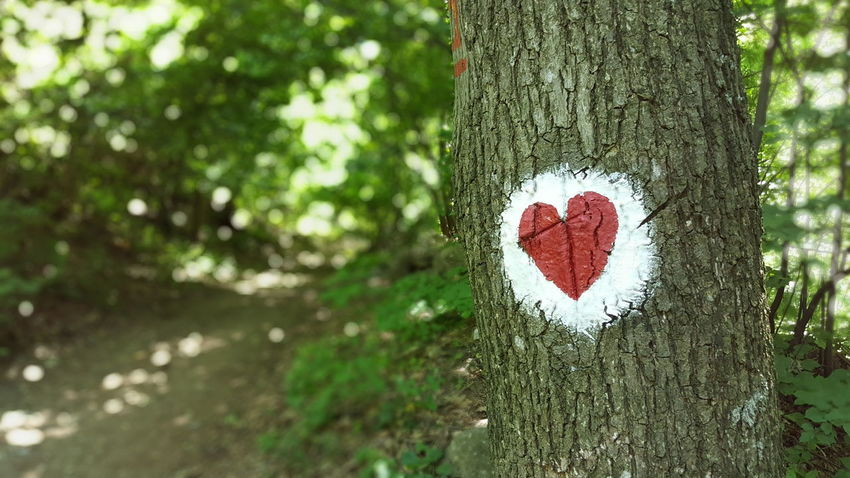 Heart Heart On Tree White Red Forrest Fruška Gora Trail Forrest Trail Tree
