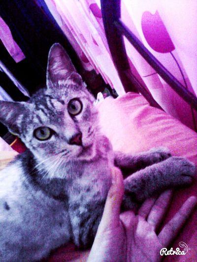 Meow... ?