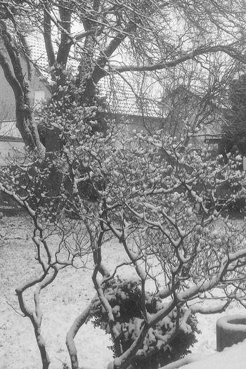 Snow Schnee Cold Kalt Blackandwhite Black & White Schwarzweiß Tadaa Community Tadaa