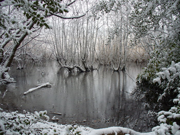 Frozen lake in forest
