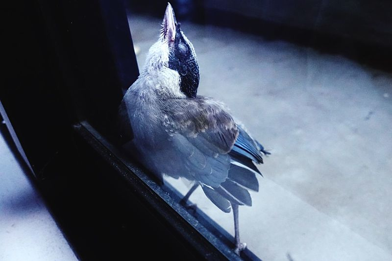 High angle view of pigeon perching