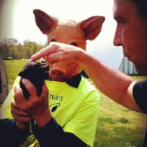 Farm Life farm fair Pigs♥ Pigman Wierd&beautiful