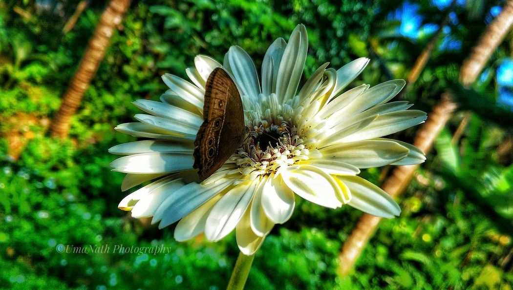 Beauty in Nature EyeEm Best Shots EyeEm Nature Lover EyeEm Selects EyeEm EyeEm Gallery Gerbera Daisy Gerbera Butterfly Butterfly - Insect Flower Head Flower Petal Insect Close-up Animal Themes Plant Green Color