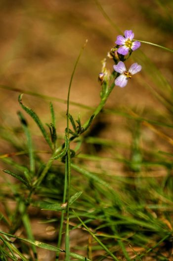 Mongolia Монгол улс Steppe Flower Head Flower Uncultivated Beauty Summer Springtime Rural Scene Close-up Grass Plant Wildflower In Bloom Plant Life Blossom Blooming