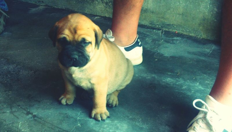 Doggy Dog Cute♡ Cute
