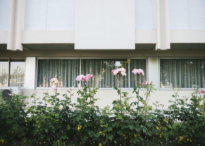 Serie - Urban Vegetation °3 Streetphotography Plants Roses Minimalism Urban Nature The Street Photographer - 2015 EyeEm Awards