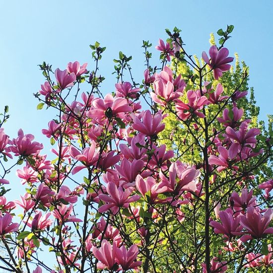 Flower Growth Nature Beauty In Nature Fragility Freshness Outdoors Blooming Sky Clear Sky Love To Take Photos ❤