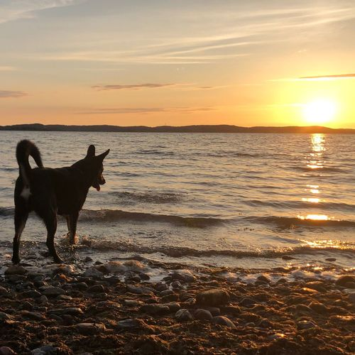 Sunset Sky Water Domestic Domestic Animals Pets Dog