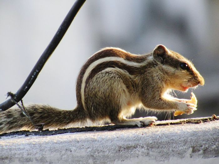 My Favorite Photo Squirrel Wildlife Photography Eating Early Morning Hairshines In Sunlight My Inspiration