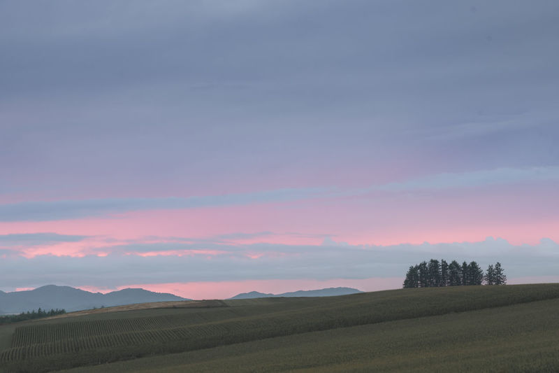 Sunset hill Furano Hokkaido Japan Sunset_collection Beauty In Nature Beauty In Nature Dusk Field Hill Landscape Mountain Nature No People Outdoors Scenics Sky Sunset Tranquility Tree