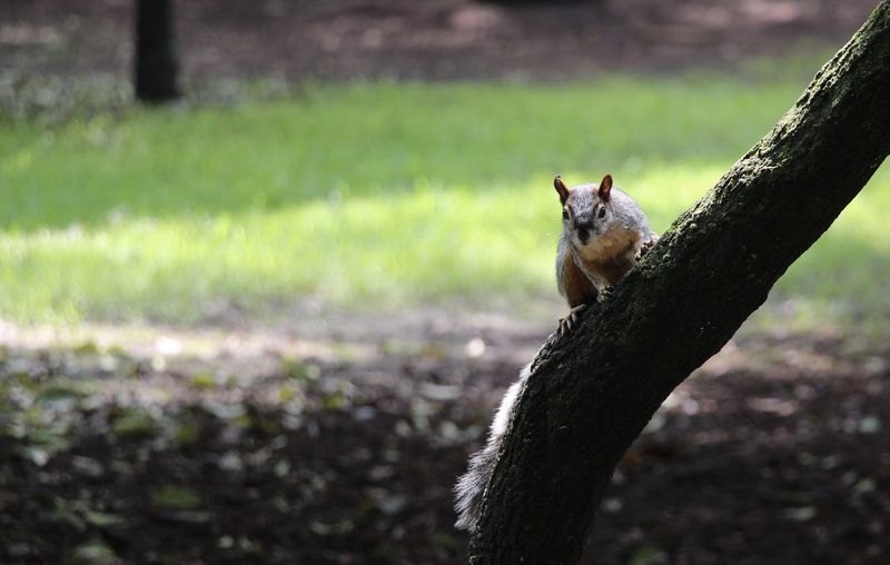 Animal Themes Animals In The Wild Day Nature Outdoors Rodent Squirrel Tree