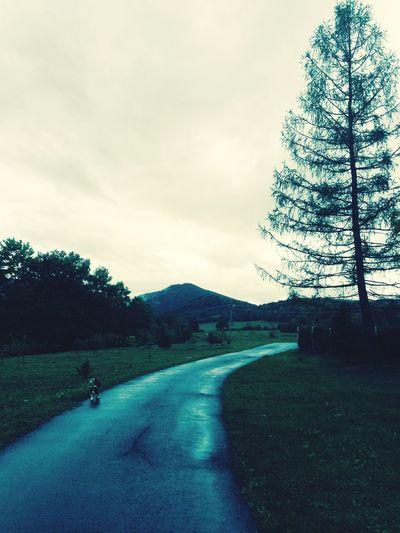 Tree Road The Way Forward Diminishing Perspective Long Mountain