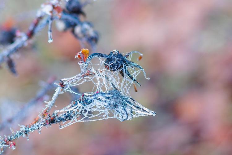 Close-up of flower frozen