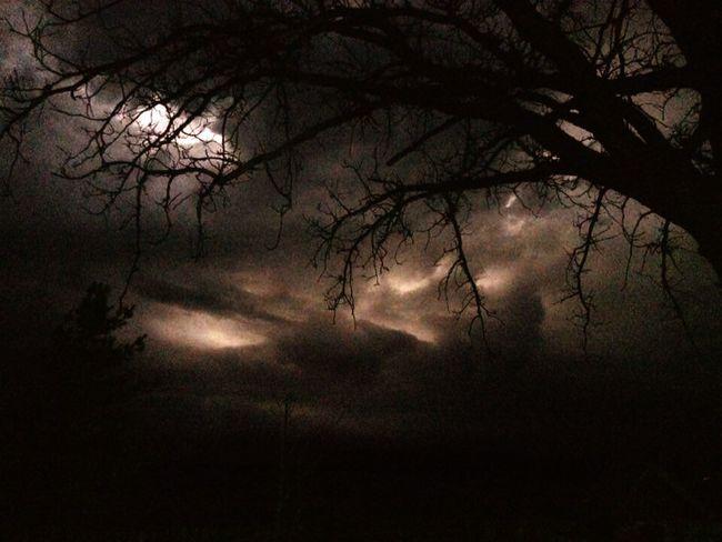 Bare Tree Branch Nightphotography