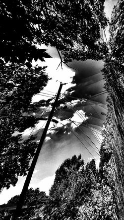 """Letting the Cables Sleep"" The Impurist My Bw Obsession Distortion Power Lines EyeEm Nature Lover Cloudporn TreePorn Sunlight And Shadow You are a beautiful contrast to this world... Notes From The Roof Musical Photos https://youtu.be/_UWCURWZlQI"