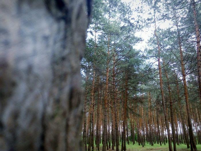 Лес, который знает гораздо больше чем любой человек, который шил вместе или против меня, на этом жизненном пути . First Eyeem Photo дахновка лес и природа спокойствиедуши тайныйдруг