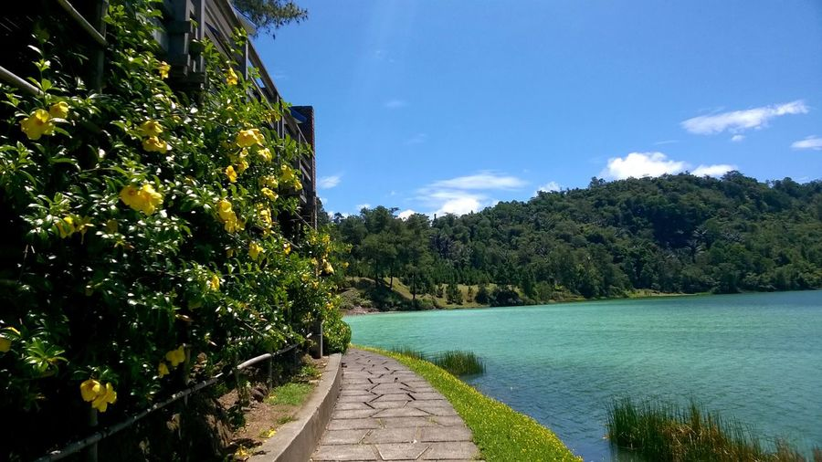 lake shore pathway Beauty In Nature Blue Danau Linow Diminishing Perspective Footpath Green Color Lake View Lakeshore Lakeview Linow Narrow Nature Pathway Plant Scenics Sky Sulphurous The Way Forward Tomohon Tomohon View Tranquil Scene Tranquility Tree Vanishing Point Walkway