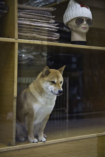 Animal Themes Bazaar Bizarre Cute Dog Lavapies  Lovely Mannequin No People Reflection Shop Window Street Life Streetphotography Pet Portraits