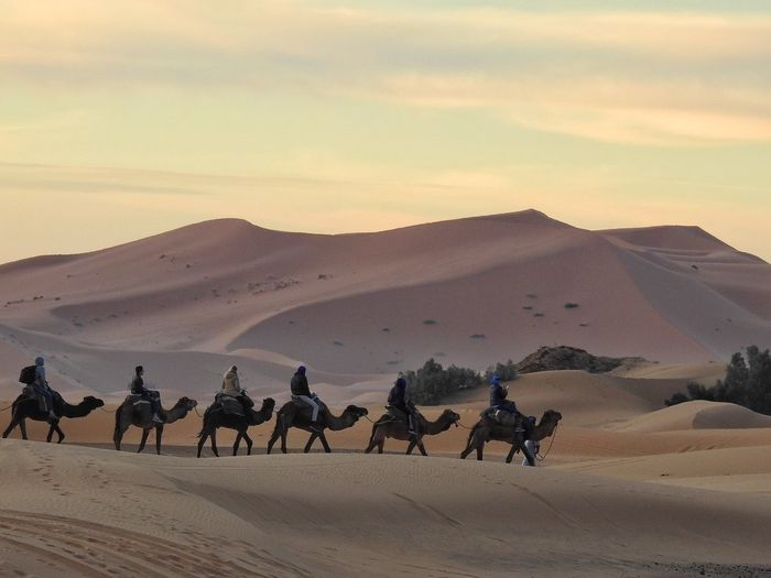 People Riding Camels At Desert During Sunset