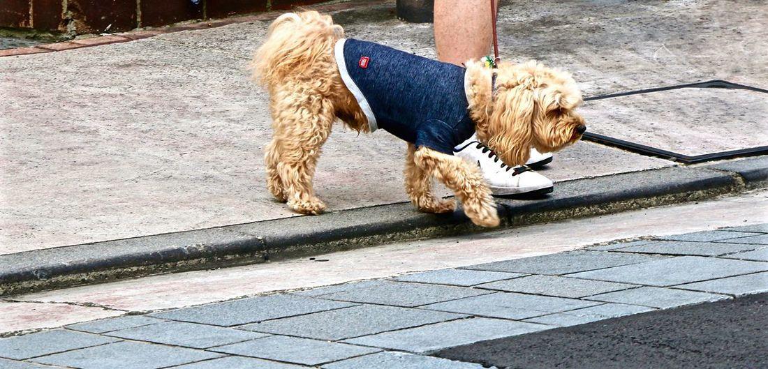 Nature On Your Doorstep Dog Love Dog Dogwalk Dog Fashion Cute Dog  Popular Photos Hanging Out Streetphotography Enjoying Life