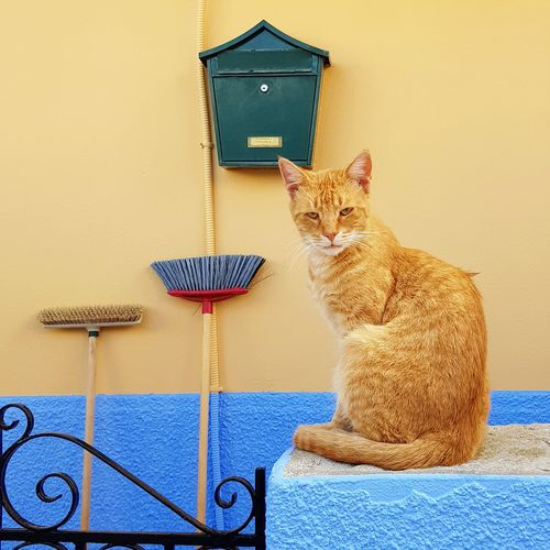 Cat looking away while sitting on wall of house