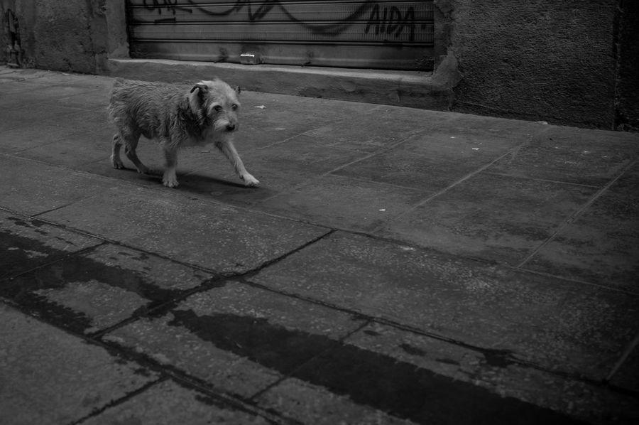 Urbanphotography Blackandwhite Streetphotography Eye4photography  Dog
