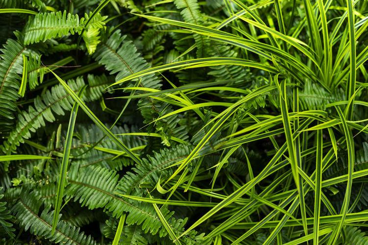 High angle view of green plants
