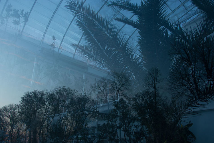 Greenhouses in winter Through Glass Plant Fog Silhouette Palm Tree Dusk Winter Cold Temperature Greenhouse Reflections Blue Hour Travel Photography Traveling Bucharest Glasshouse Plant Life Growing Palm Leaf