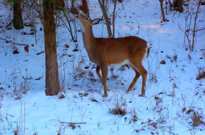 Deer Samsung Galaxy Note 4 Deer Moments Deer ♥♥ Deersighting Snow ❄ Snow Day Nature Photography Nature_collection Tree_collection  Woods