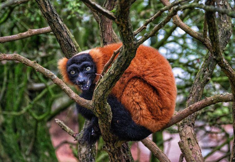 Taking Photos Malephotographerofthemonth EyeEm Nature Lover Nature On Your Doorstep The Lake District  South Lakes Animal Park Lemur