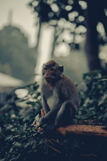 Waiting Food Wild Animal Monkey Moody Green Faded Moody Moody Nature INDONESIA Animals In The Wild Animal Themes Animal Wildlife One Animal Animal No People Vertebrate